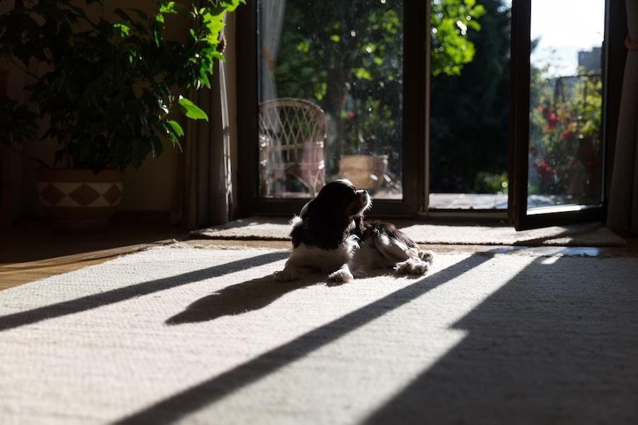 dog-in-the-sun-PHHS85M-min.jpg?1551800056014